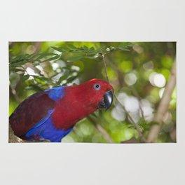 Eclectus Parrot Rug