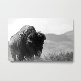 Black and White Bison Metal Print