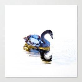 Swan in Winter Canvas Print