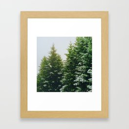 Winter Pine Tree Forest (Color) Framed Art Print