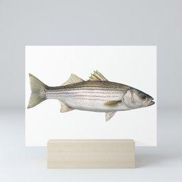 Striped Bass Mini Art Print