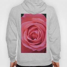 Bloom in Pink Hoody