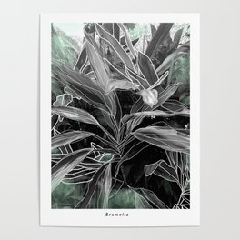 The botanical collection N3 Poster