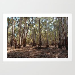 Gumtree Forest Art Print