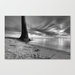 Lone Tree - Black and White Canvas Print