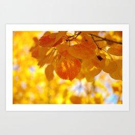 Sunlight through autumn aspen leaves Art Print