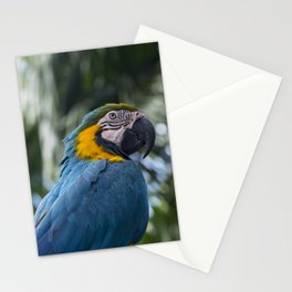 wild parrot Stationery Cards