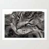 tigger Art Prints featuring Tigger by Anchors of Hope Photography