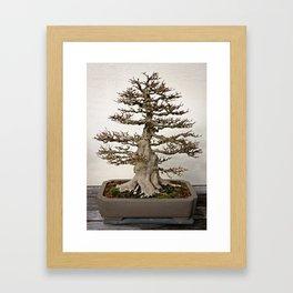 Maple Bonsai Framed Art Print