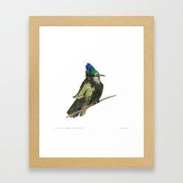 Antillean Crested Hummingbird Framed Art Print