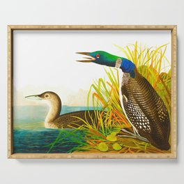Great Norther Diver or Loon John James Audubon Scientific Birds Of America Illustration Serving Tray