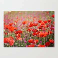 Poppies in Spring Canvas Print