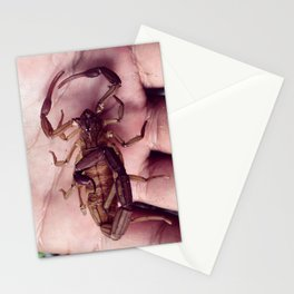 Alacran Stationery Cards