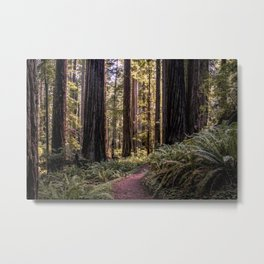 A walk in the redwoods Metal Print