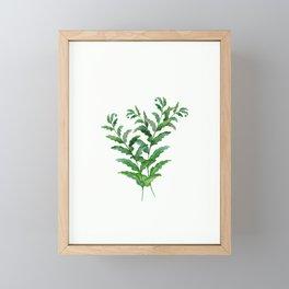Fern leaves .2 Framed Mini Art Print