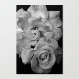 Alabaster Roses Canvas Print
