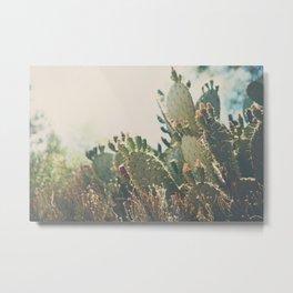 desert prickly pear cactus ... Metal Print