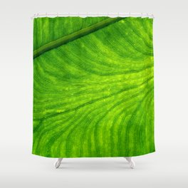 Leaf Paths Shower Curtain