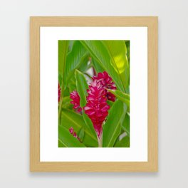 Alpinia purpurata Jungle King Red Ginger Tropical Flowers Lāhainā Maui Hawaii Framed Art Print