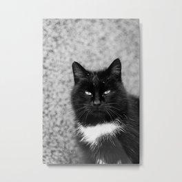 Black and white cat portrait Metal Print