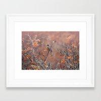 robin Framed Art Prints featuring robin by RasaOm