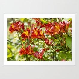 Red Flora Art Print