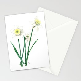White Daffodils - 'Ice Follies' Botanical Illustration Stationery Cards