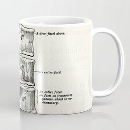 Vintage Anatomy Illustration of the Thoracic vertebrae Coffee Mug