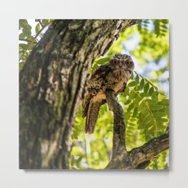 Tawny Frog Mouth Owl Metal Print