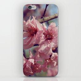 Sakura... One Spring in Beijing iPhone Skin