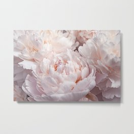 Floral Photography   Peony Pink Cluster   Flowers   Botanical   Plant Metal Print