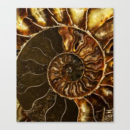 Earth treasures - Brown and yellow ammonite Canvas Print