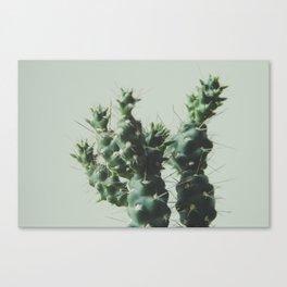 el cactuxxx Canvas Print