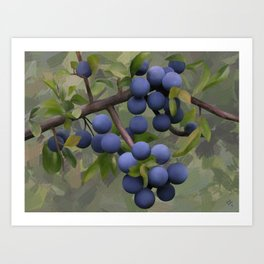 Blackthorns, watercolors Art Print