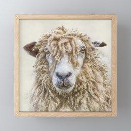 Longwool Sheep Framed Mini Art Print
