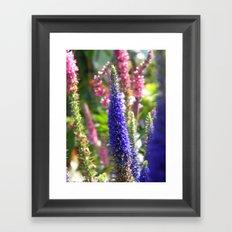 Tall Violet Flower  Framed Art Print