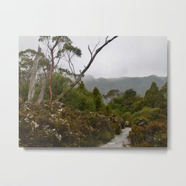 Eucalypt forest Metal Print