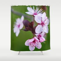 cherry blossom Shower Curtains featuring Cherry Blossom. by Michelle McConnell