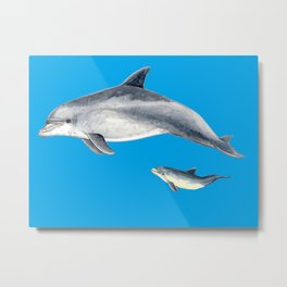Bottlenose dolphin blue background Metal Print