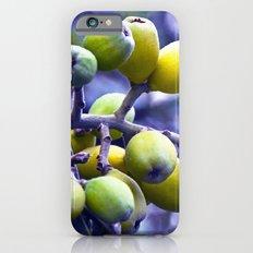 SICILIAN FRUITS iPhone 6s Slim Case