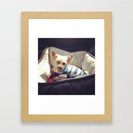 Brody the yorkie Framed Art Print