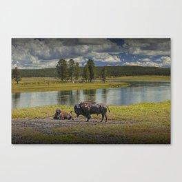 Buffalo by Yellowstone River Canvas Print