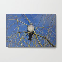 Pigeon Perch Metal Print