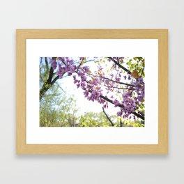 Redbud branch Framed Art Print