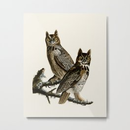Great Horned Owl - Vintage Bird lllustration Metal Print