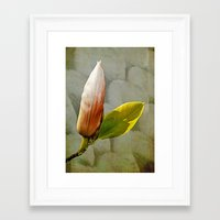 magnolia Framed Art Prints featuring Magnolia by LoRo  Art & Pictures