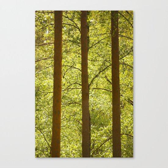 Three Tree Trunks  Canvas Print
