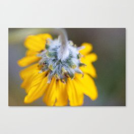 I Loved My Friend Canvas Print