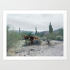 Mexican Horse Hide Art Print