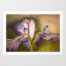 The Elegant Iris Art Print